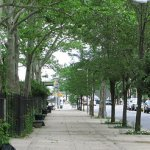 12 de motive de a planta copaci de-a lungul străzii